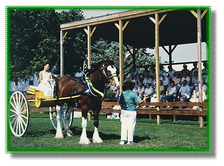 clydesdales for sale,for sale,